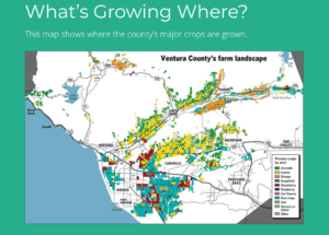 Ventura County growing areas by crop type