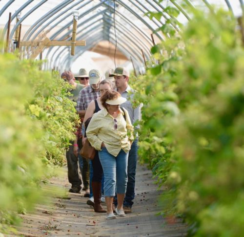 Farm Day Ventura County Tours