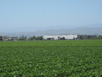 Ventura County Agriculture